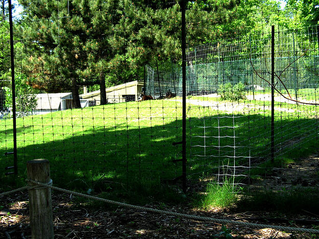 Four Types Of Wire Mesh Fencing Materials
