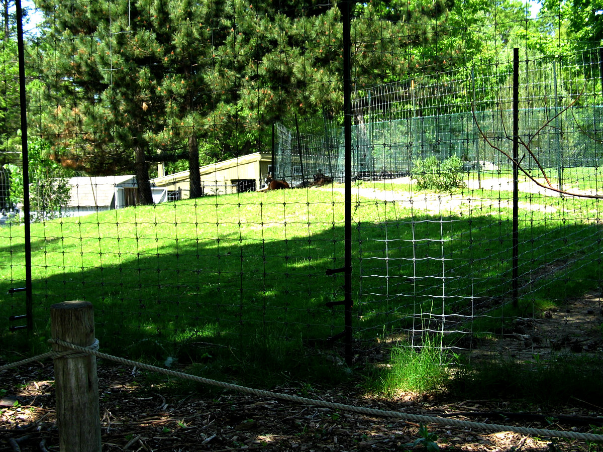 The 4 Main Types Of Wire Mesh Fencing Materials