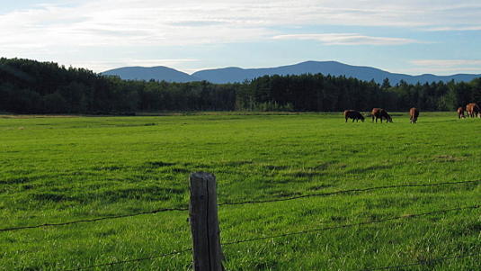 field fence and cattle