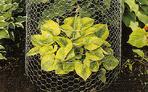 hex netting wire mesh