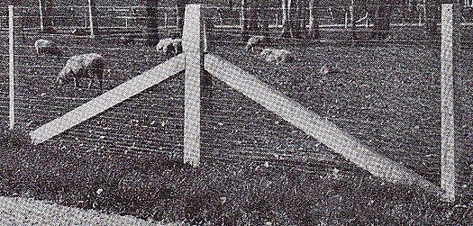 concrete posts & braces