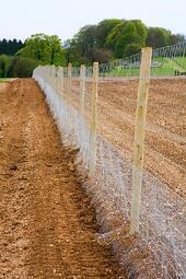 deer fence or mesh