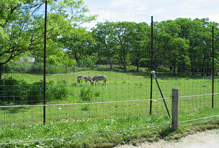 deer & wildlife fence and pasture