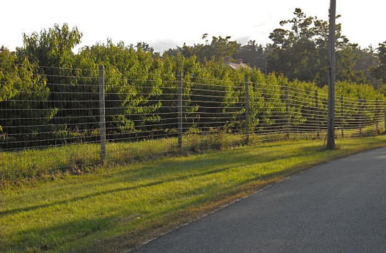 high tensile deer fence