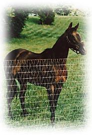diamond mesh woven horse fence