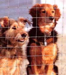 ks_2.2_dogs.jpg