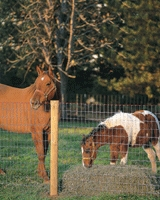 2 horses behind fence