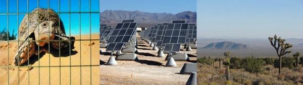 turtle fence solar plant desert