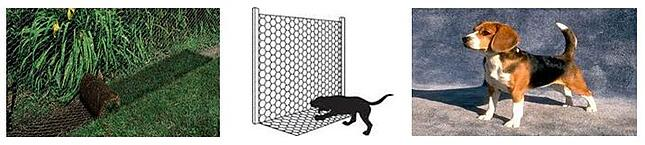 Apron fence and beagle