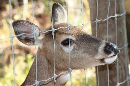 deer_fence-1