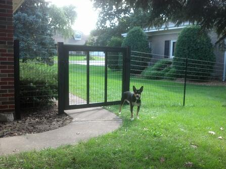 vinyl coated fence with dog and gate