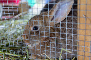 Rabbit behind mesh cage