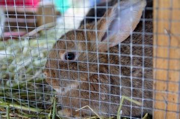 bunny behind mesh