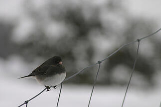 A bird on a woven wire fence