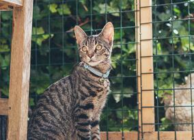 cat in front of welded wire fence