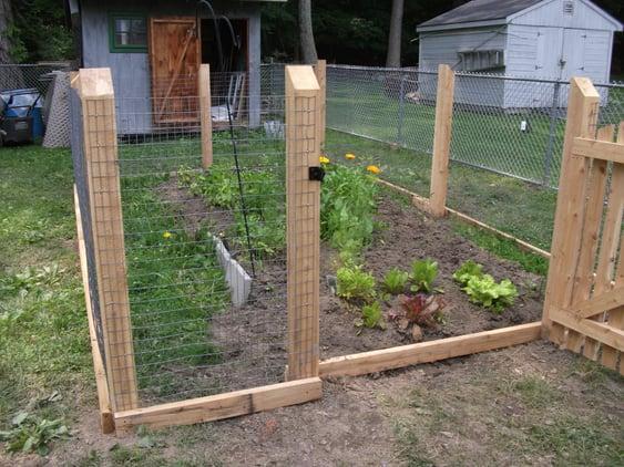 veggie garden behind fence