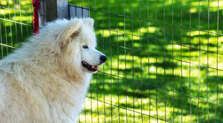 dog behind welded wire fence