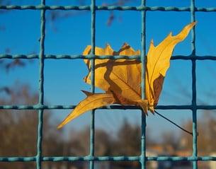 prisoned-leaf