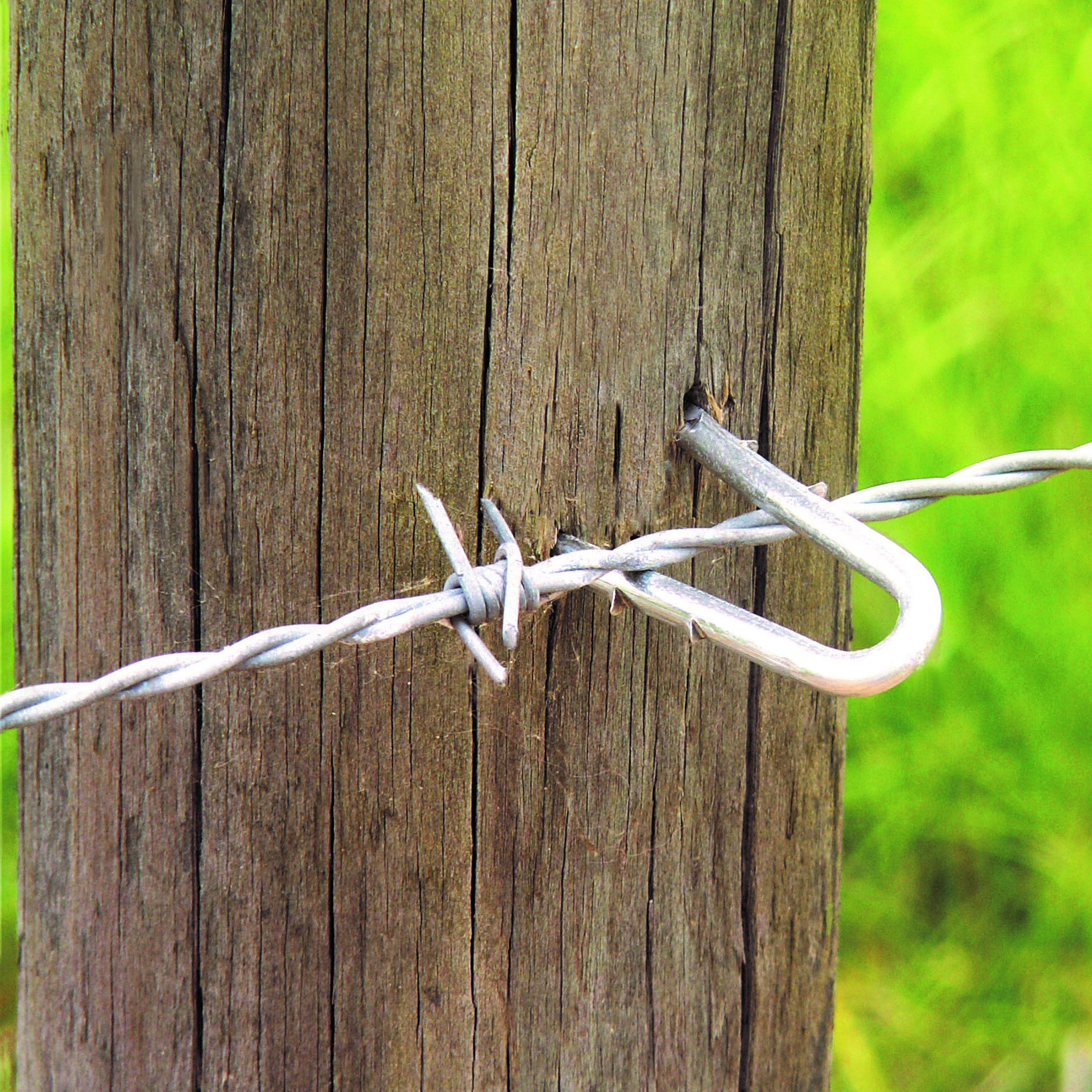 Galvanized staples to attach woven or welded fence to wood posts.