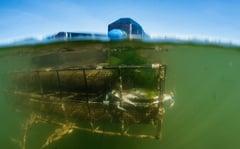 underwateroyster
